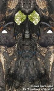 sierokosz_ewa_ukryte_w_drzewie.jpg