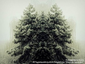 tracz_magdalena_lesniczy.jpg